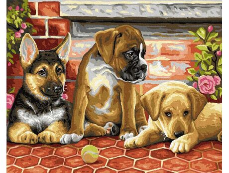 Three puppies paint by numbers