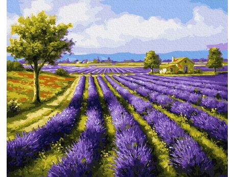 Lavender field paint by numbers