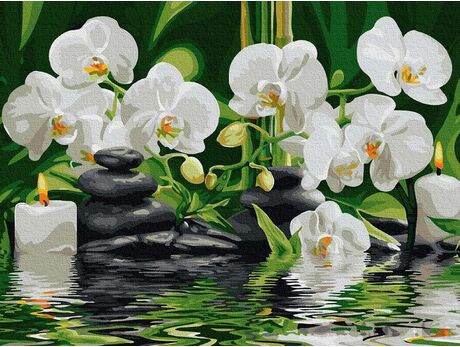 Orchids in the calm water