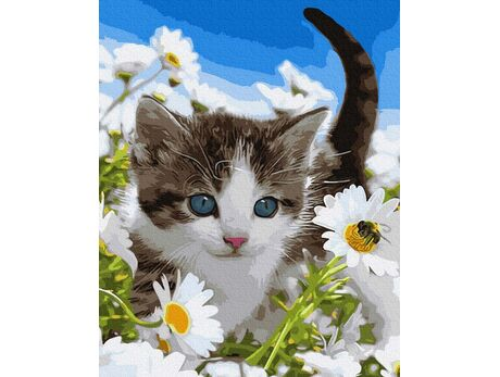 Kitten in the field of camomiles