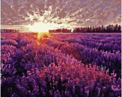 Sunset over the lavender field