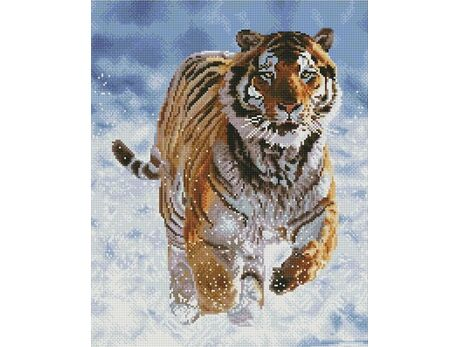 Tiger in motion (40x50CM)