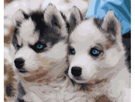 Cute husky paint by numbers
