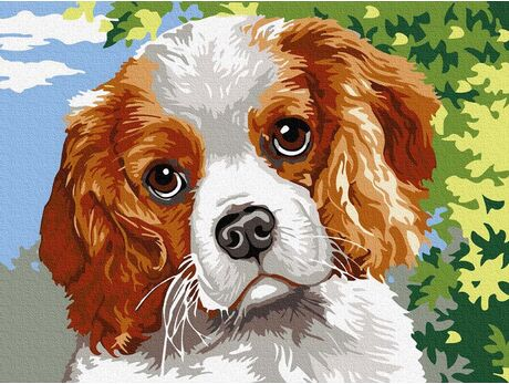 Sweet Spaniel paint by numbers