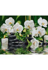 Orchids in quiet water