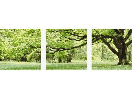 A perennial oak