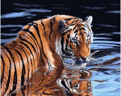 Tiger and water