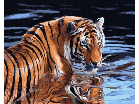 Tiger and water paint by numbers