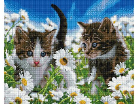 Kittens on a camomile field