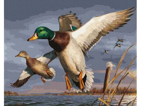 Flight of ducks paint by numbers