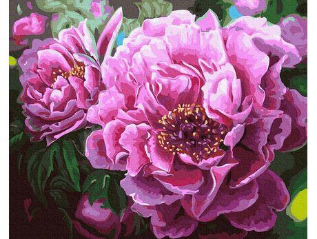 Blooming peonies paint by numbers