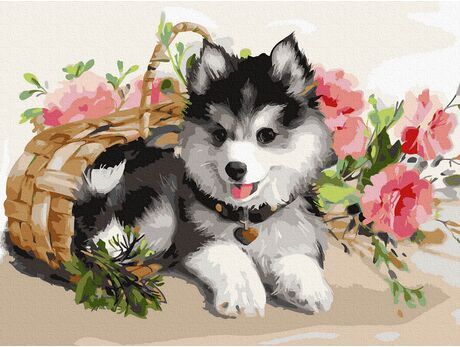 Husky Puppy paint by numbers
