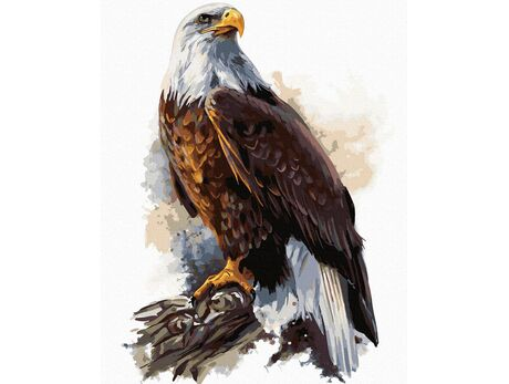 Bald Eagle paint by numbers