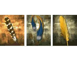 Variety of feathers